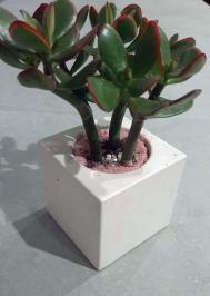 Вазон бетонный, куб 10 см, белый